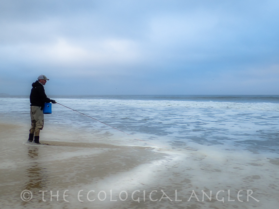 The ecological angler fly fish california surf for Surf fishing northern california
