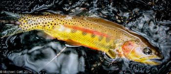 The Ecological Angler - Fly Fishing Cottonwood Lakes