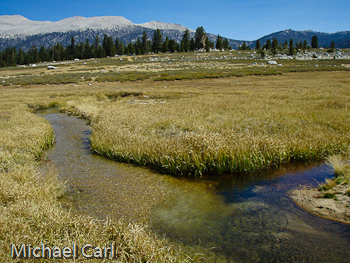 Golden Trout Fishing | The Ecological Angler Fly Fishing Golden Trout Creek