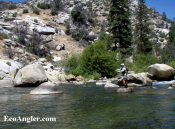 The ecological angler fly fishing the kern river for Kern river fishing spots