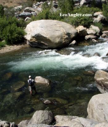 The ecological angler kern river johnsondale bridge to for Kern river fishing