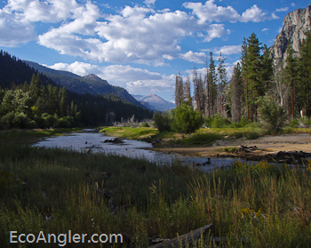 The Ecological Angler - North Fork of the Kern River (Funston Meadow