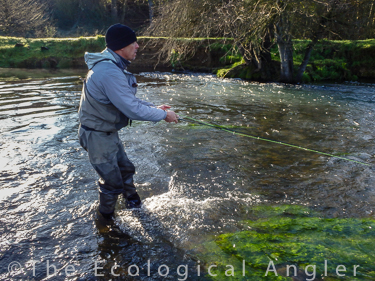 the ecological angler fly fishing lower mokelumne river