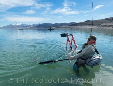 The ecological angler fly fishing pyramid lake 2017 for Fly fishing nevada