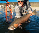 Fly Fisherman catches Pilot Peak Lahontan out of  Pyramid Lake Nevada.