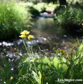 The Ecological Angler - Sagehen Creek