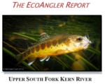 The EcoAngler Report - South Fork Kern River