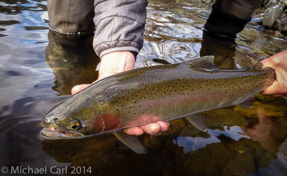The ecological angler fly fishing northern california for Steelhead fishing california