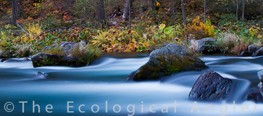 McCloud River Streamscape