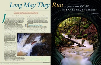 Bay Nature Magazine A Quest for Coho