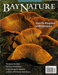 Bay Nature Magazine October - December 2012