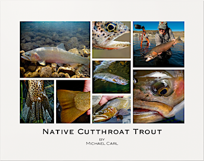 Native Cutthroat Trout Poster by Michael Carl