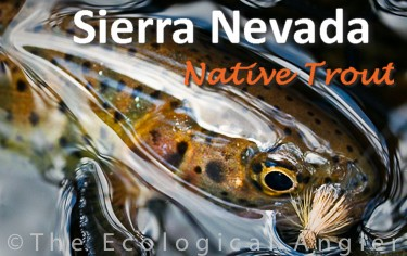 Native Trout of the Sierra Nevada