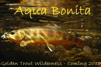 Californias Native Trout of the Golden Trout Wilderness