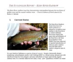 The EcoAngler Report - Kern River Rainbow