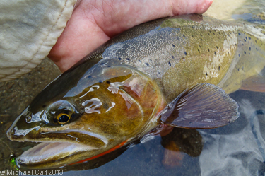 Yellowstone Cutthroat signature red slash